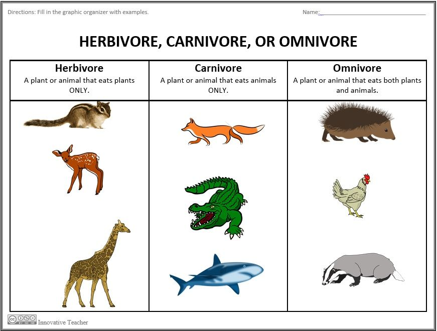 Herbivore Carnivore Omnivore Graphic Organizer Pinterest