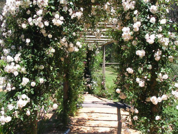 australia gardens australias open garden schemes clematis cottage garden - Cottage Garden Ideas Australia