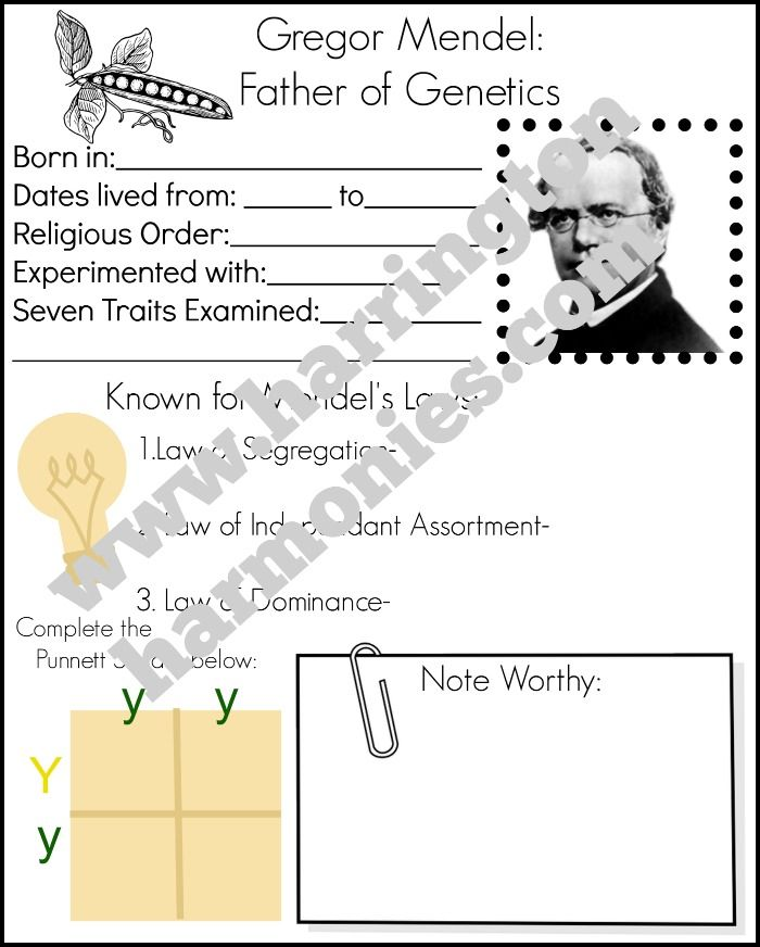 Gregor Mendel Worksheet jannatulduniya – Gregor Mendel Worksheet