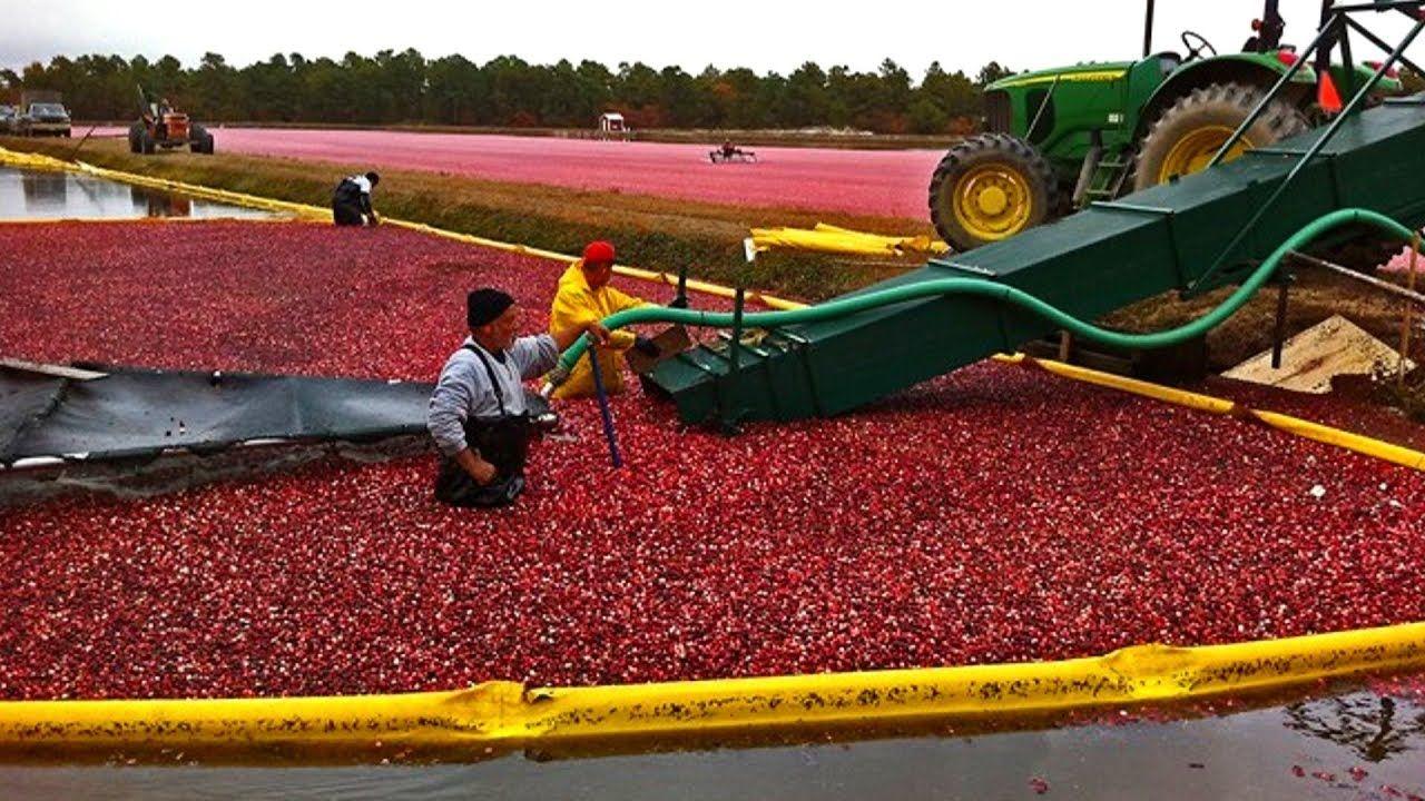 Modern Technology Agriculture Harvesting Machines Modern Technology Agriculture Machine Agriculture