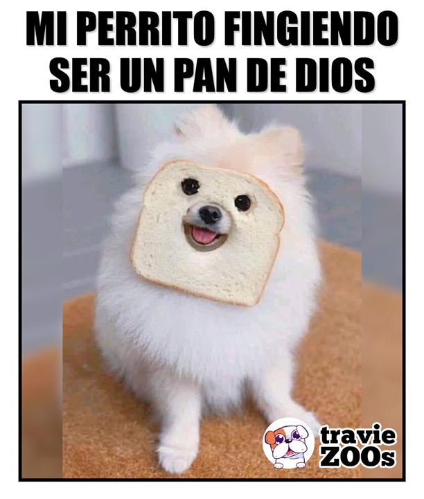 Pero En Realidad Son Terribles Memes Animales Memes De Perros Chistosos Chistes De Perros