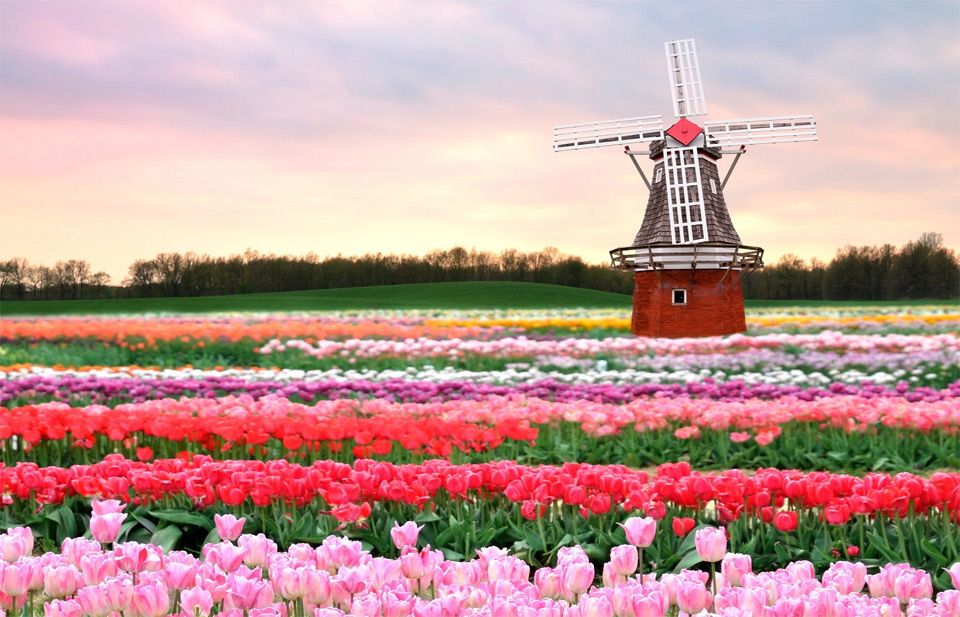 Traditional Dutch windmill in middle of heavenly