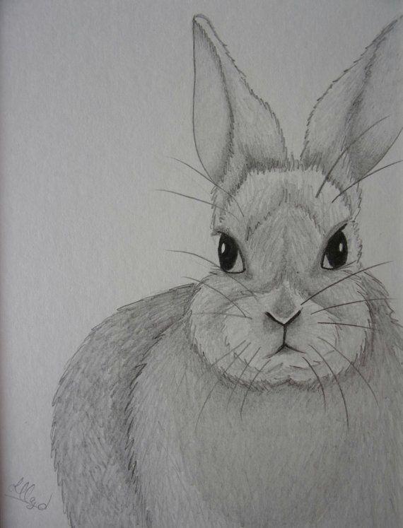 Rabbit Pencil Drawing Rabbit Drawing Pencil Sketch 10x8 Drawing