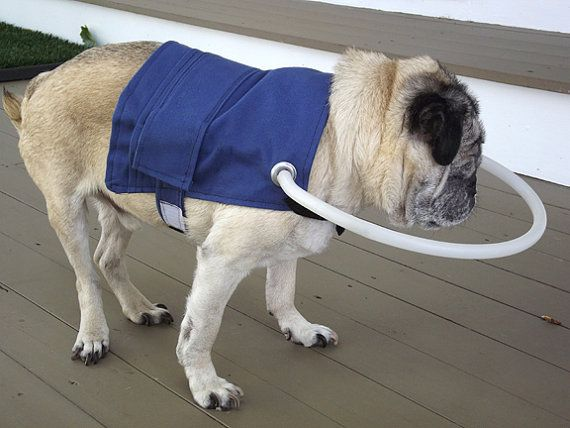 This Dog Jacket Is Designed With The Blind In Mind There Are Adjule Straps Across Chest And Stomach A Reinforced Plastic Halo