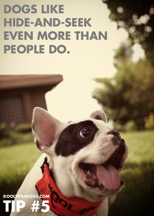 Dogs Like Hide And Seek Even More Than People Do Dog Activity Http Www Kooltips4dogs Com Puppy Play Dog Friends Pet Paws