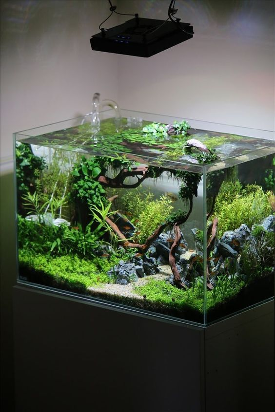 You Can Create Amazing Forest Inside Your Living Room Welcome To The Wonderful World Of Aquascape Diy Fish Tank Aquarium Fish Tank Aquascape Design
