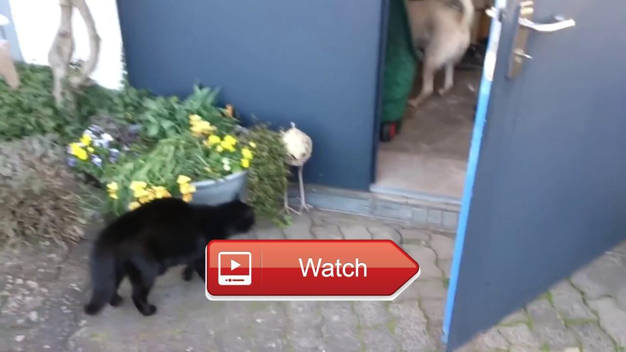very funny videos for everfunny catsdogs
