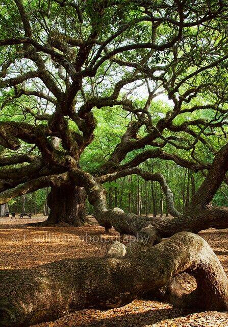 Der Baum sucht sich seinen Platz