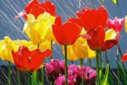 Spring Rain Fragrance Oil