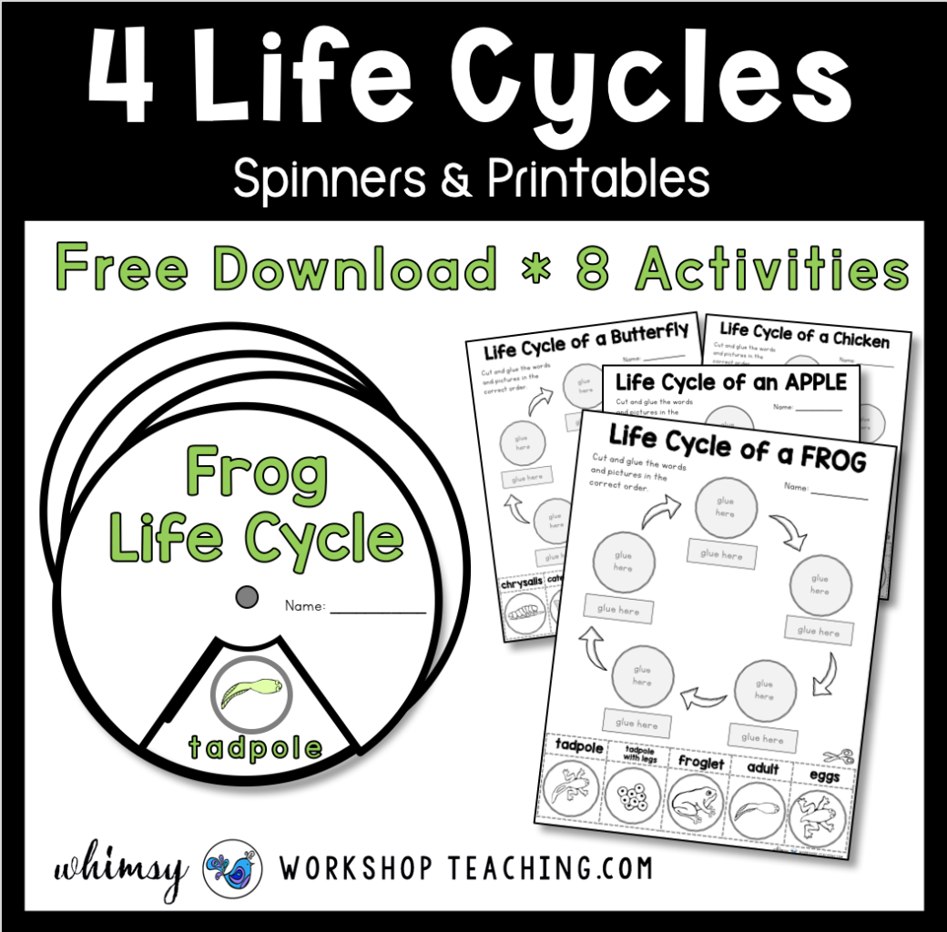 Life Cycles Free Activities In