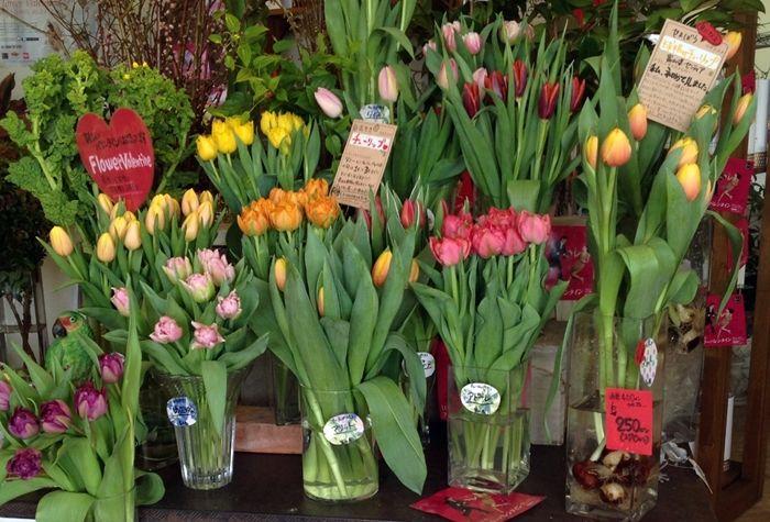富山県センティアさん「チューリップ」 | お花屋さん, 生花店, 花