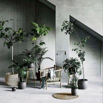 カベが印象的なこちらの写真。観葉植物に囲まれて、ゆっくりと読書をして過ごしたいですね。カベにつけられたランプもポイント。