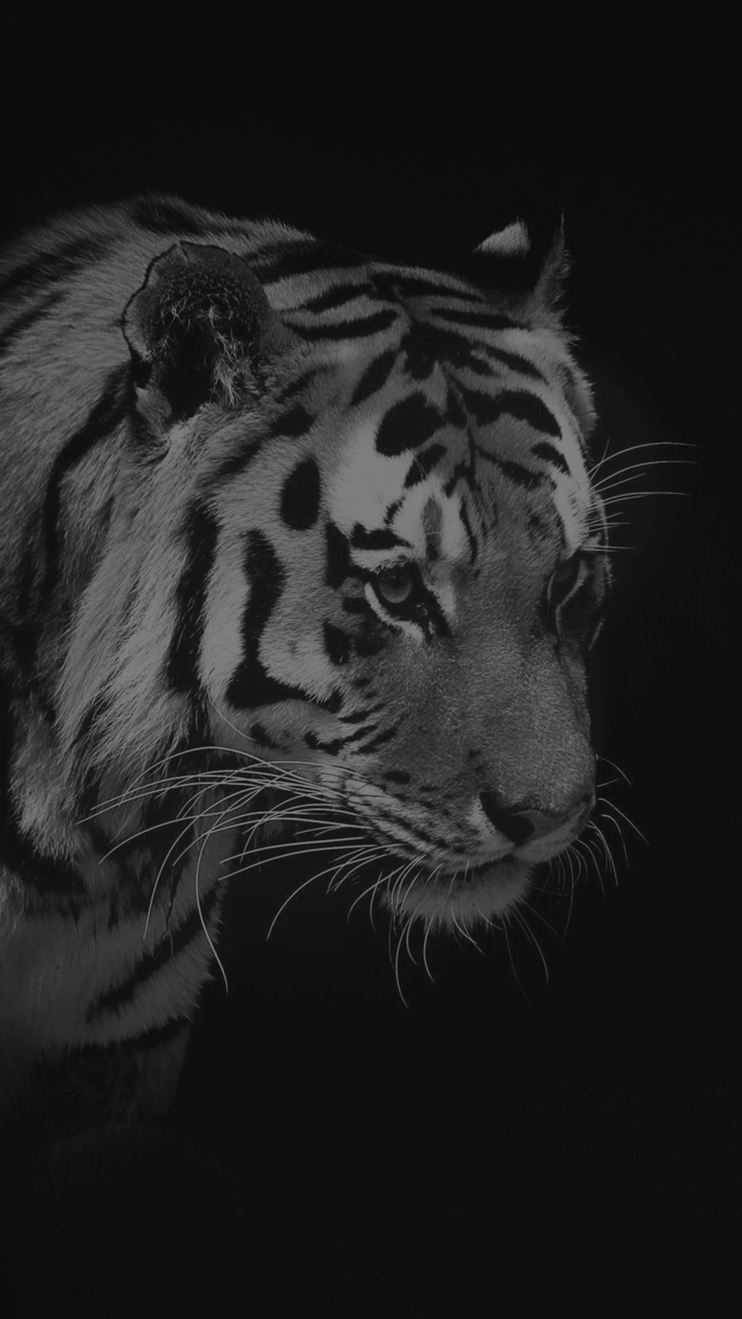 Tiger Dark Animal Love Nature Iphone 6 Plus Wallpaper In