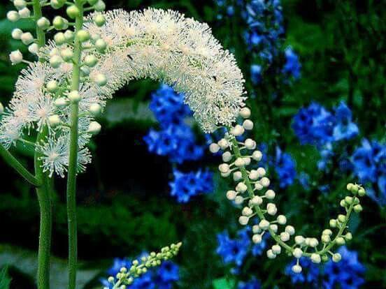 Flor dos sonhos