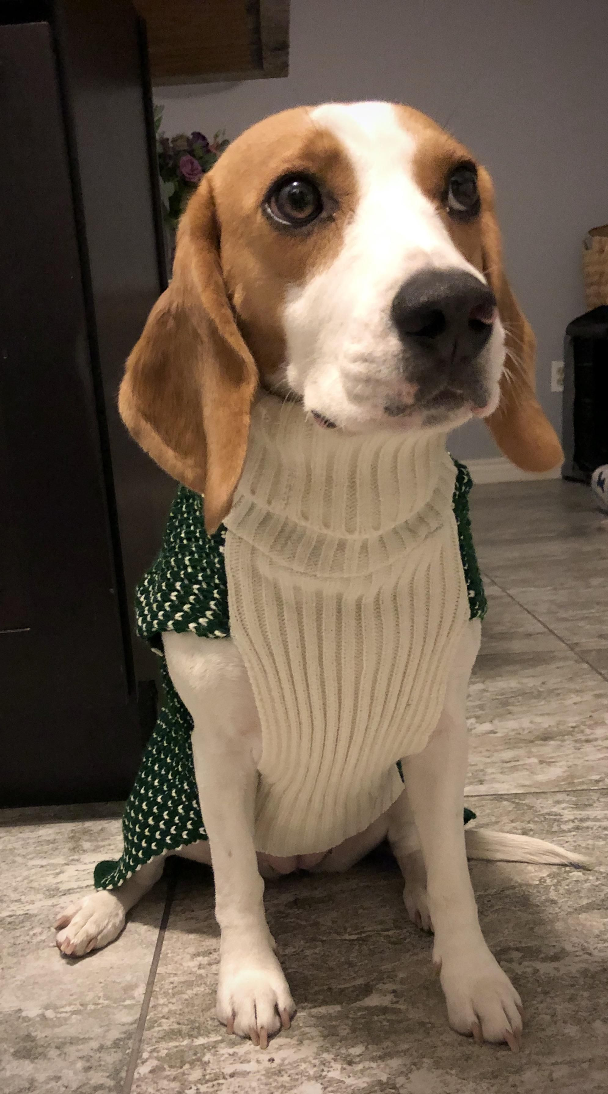 Its Sweater Weather And She Hates It Https Ift Tt 2sn8whj