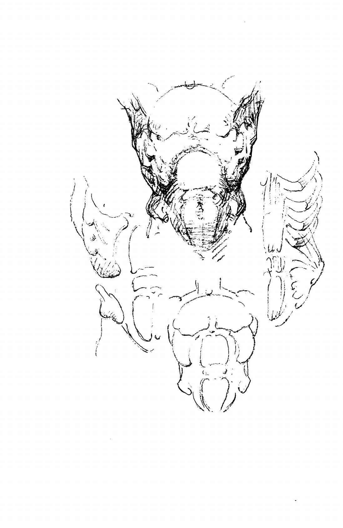 Constructive anatomy in 2020 free novels anatomy books