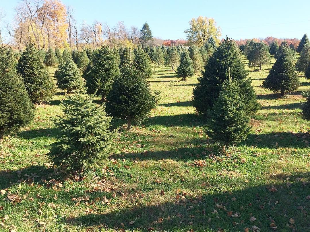 Christmas Tree Farm Sussex County Throughout The Garden State There Are Picturesque Christmas Tree Farms Many Family Owned And Christmas Tree Farm Christmas Tree Outdoor Decor