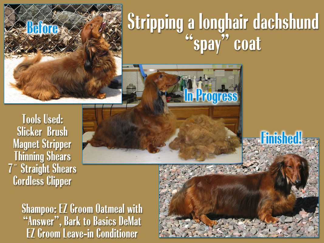 Dachshund Doggie Care Dachshund Dogs And Puppies Grooming