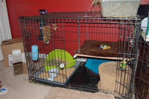 Bi Level Condo From Dog Crate Dog Crate Bunny Cages Diy Dog Crate