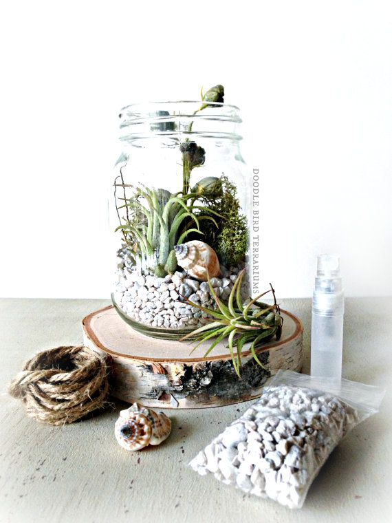terrarium kit includes 1 glass mason jar measuring 6 high 1 clump of freshly preserved. Black Bedroom Furniture Sets. Home Design Ideas