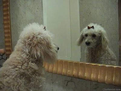 Funny Animals Looking In Mirror All Funny