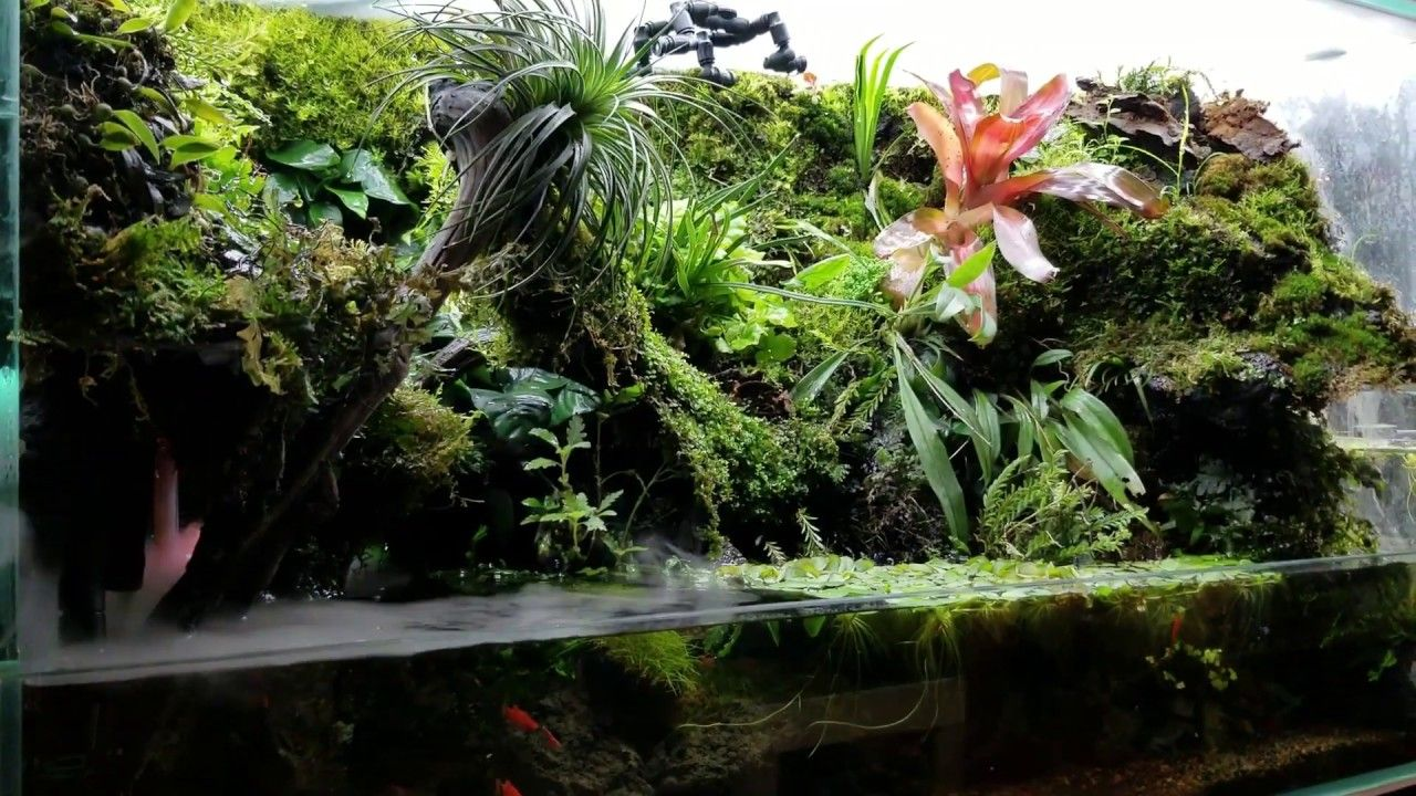 80 Best Making An Aquaterrarium With Two Flowing Waterfalls Ideas Diy Waterfall Waterfall Waterfall Fountain