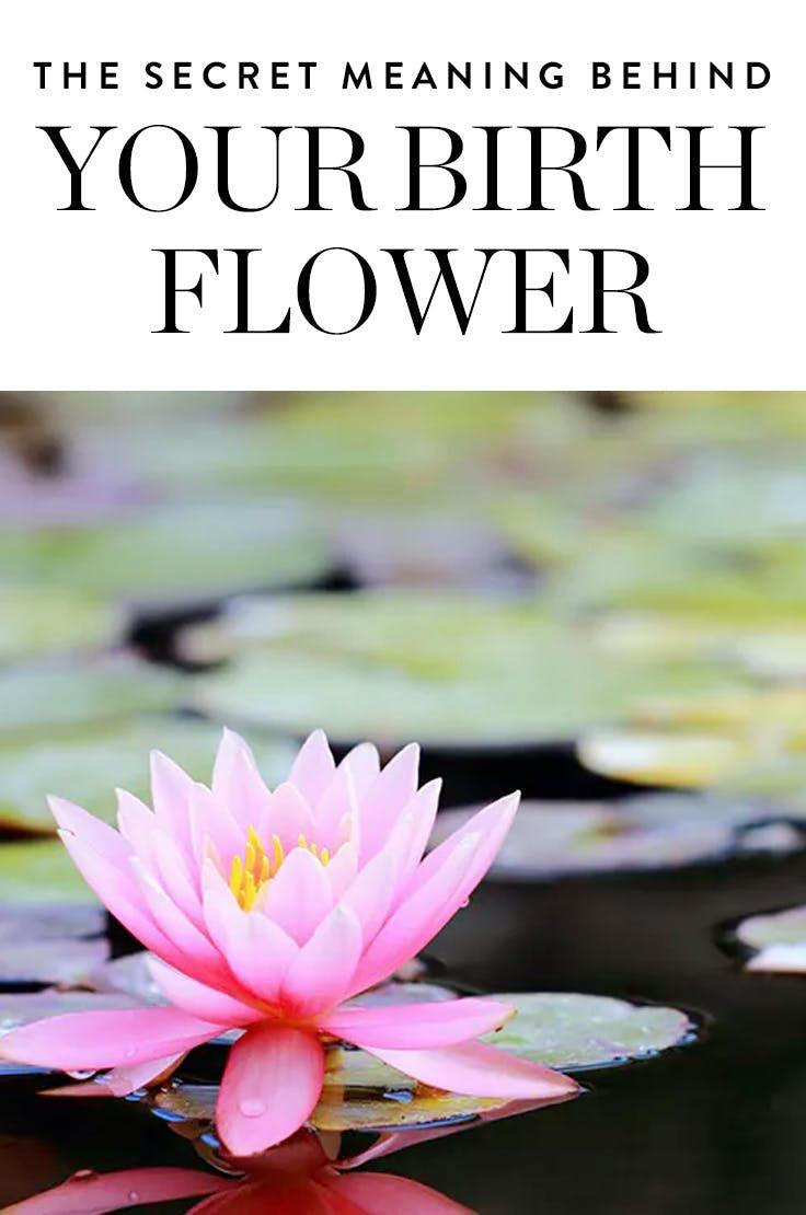 The Secret Meaning Behind Your Birth Flower Birth Flowers Birth