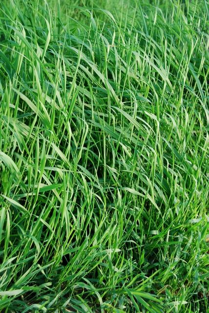 How To Plant Grass Seed Planting Grass Garden Plants