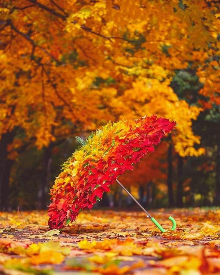 Доброго утра Счастливой осени | Осенние картинки, Осенние ...