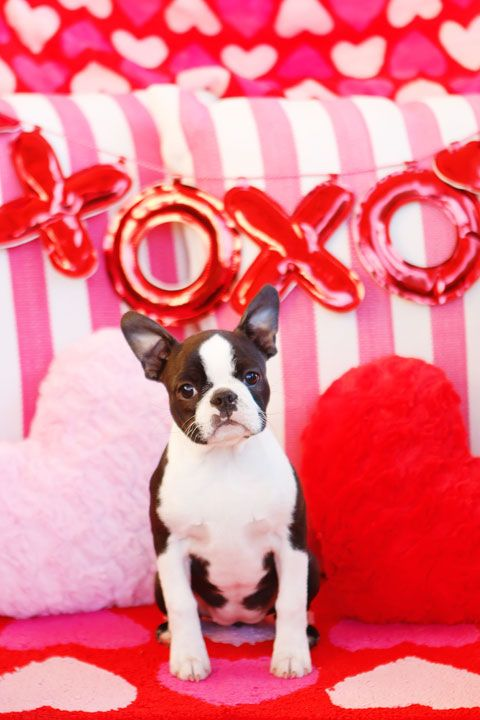 Happy Valentine S Day From Our Dogs And New Puppy Puppy Valentines Happy Valentines Day Pictures Happy Valentines Day