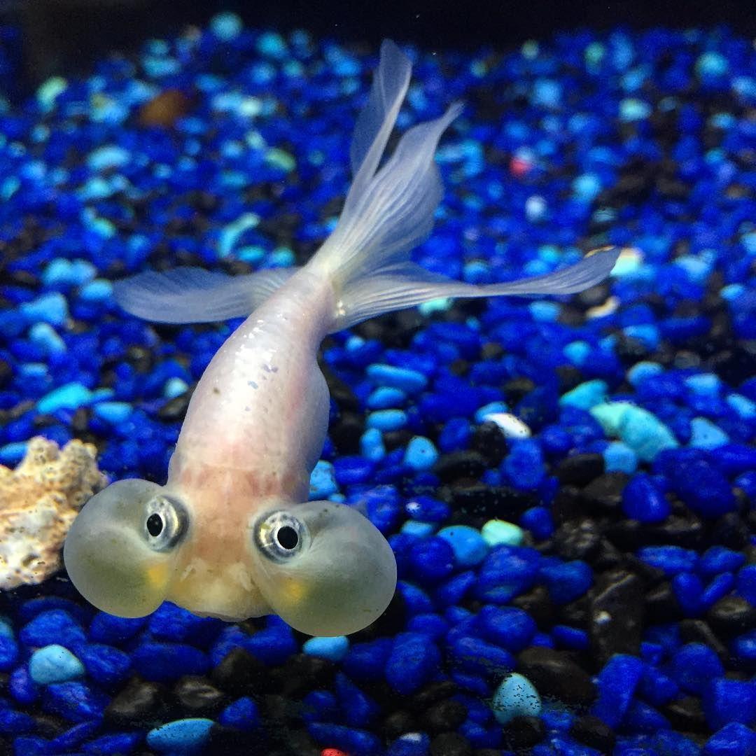 Cleaning & Maintenance Earnest Aquarium Glass Fish Scraper Tank Algae 2 Cleaning Cleaner Brush Head Brush