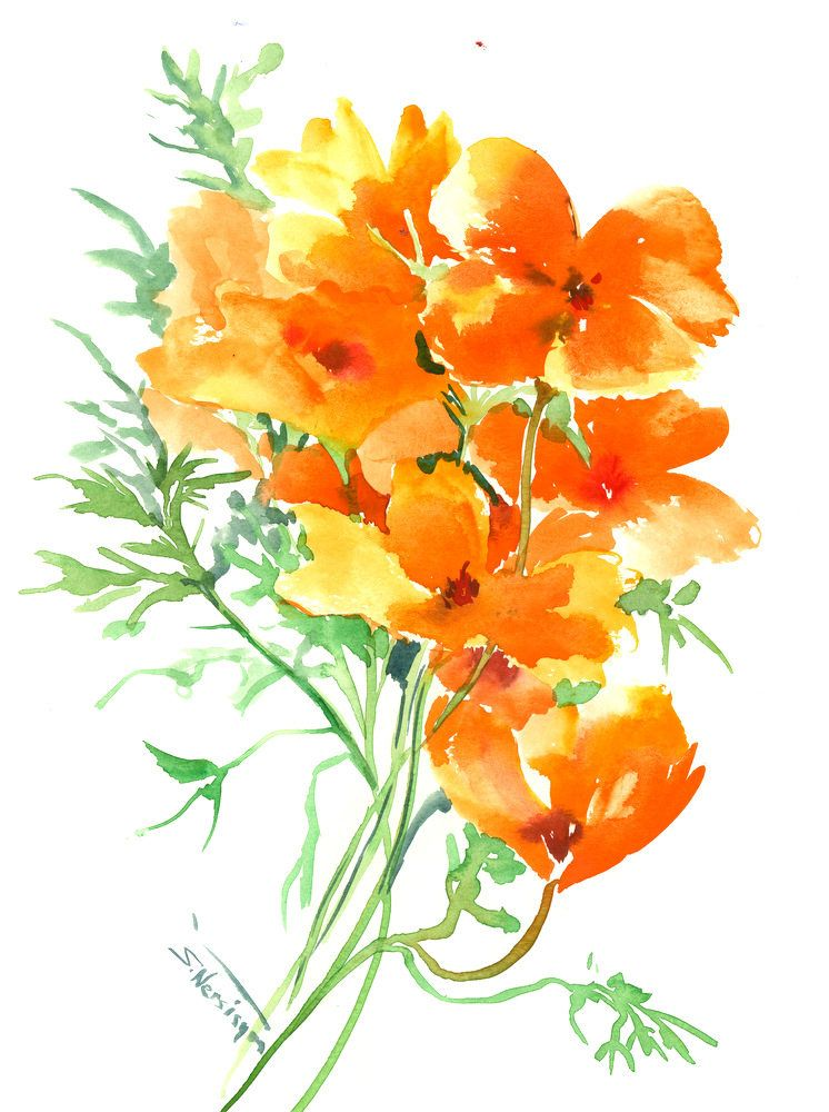 California Poppies Original Watercolor Painting 12 X 9 In