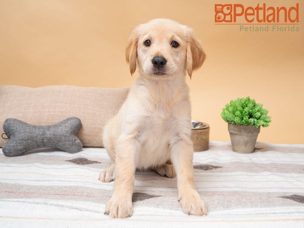 Park Art My WordPress Blog_Boston Terrier Puppies For Sale In Millersburg Ohio