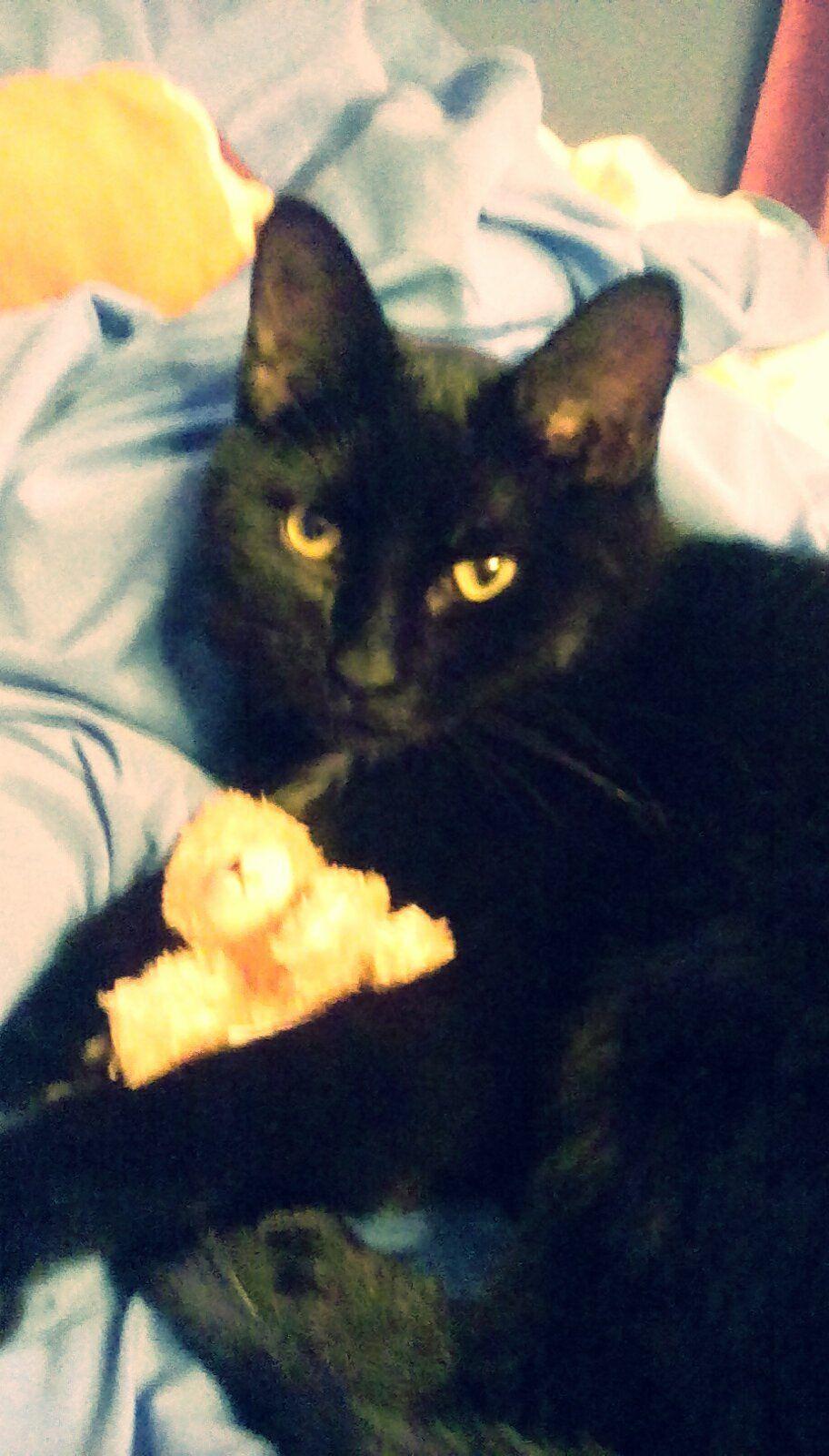 My cat! He's so adorable!!!<3