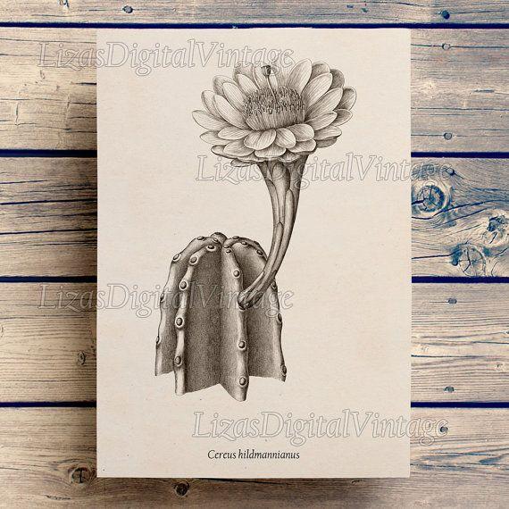 Cactus print, Prints and posters, Antique botanical print, Wall art prints, Printable art, Art print, Graphics, Illustration, Cactus art