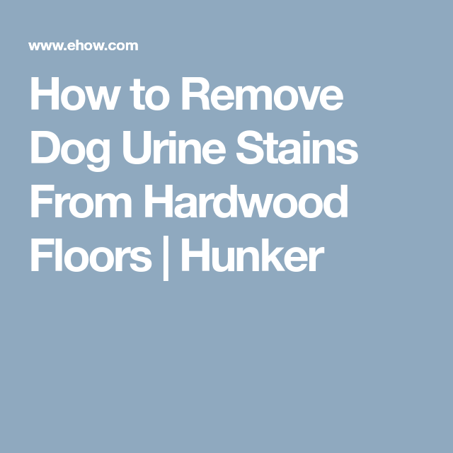 How Get Rid Dog Pee Smell Wood Floor Hardwood Floors Staining
