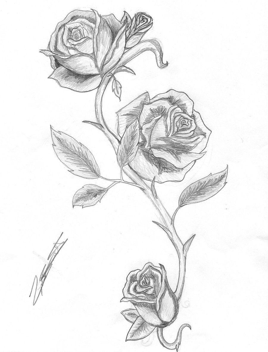 Rose and Thorns by IsAlwaysInspired deviantart com on @deviantART