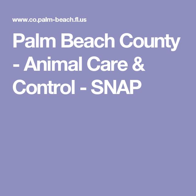 Palm Beach County Animal Care Control Snap Pet Care Palm