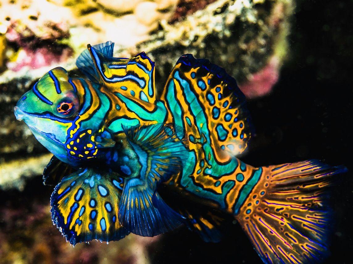Pin On Sea Life Corral Reefs