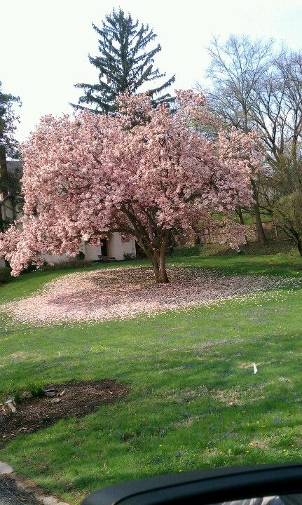 . Ohio in the spring,see the heart under the tree