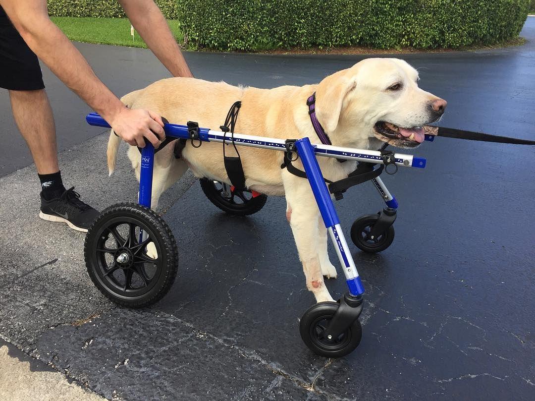 Full support large dog wheelchairs walkin wheels dog