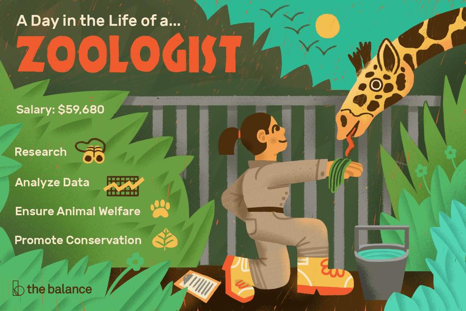 Zoologist Job Description Salary, Skills, & More