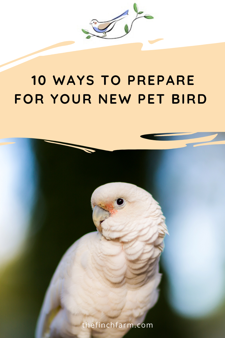 10 Ways To Prepare For Your New Pet Bird Pet Bird Pets Bird