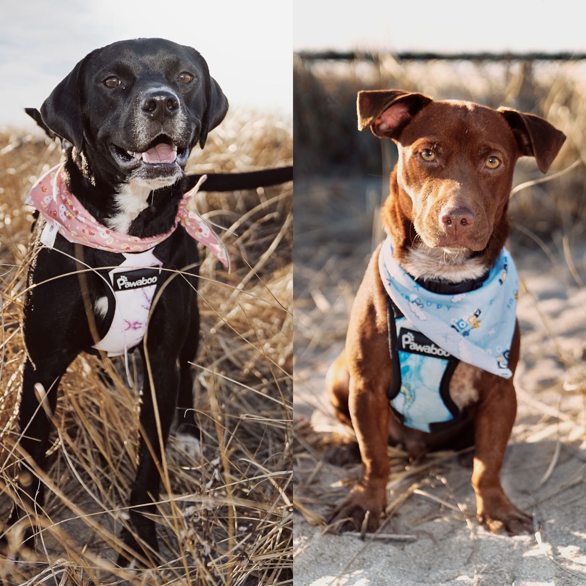 Adopt Luna & Button on Petfinder in 2020 Dogs and kids