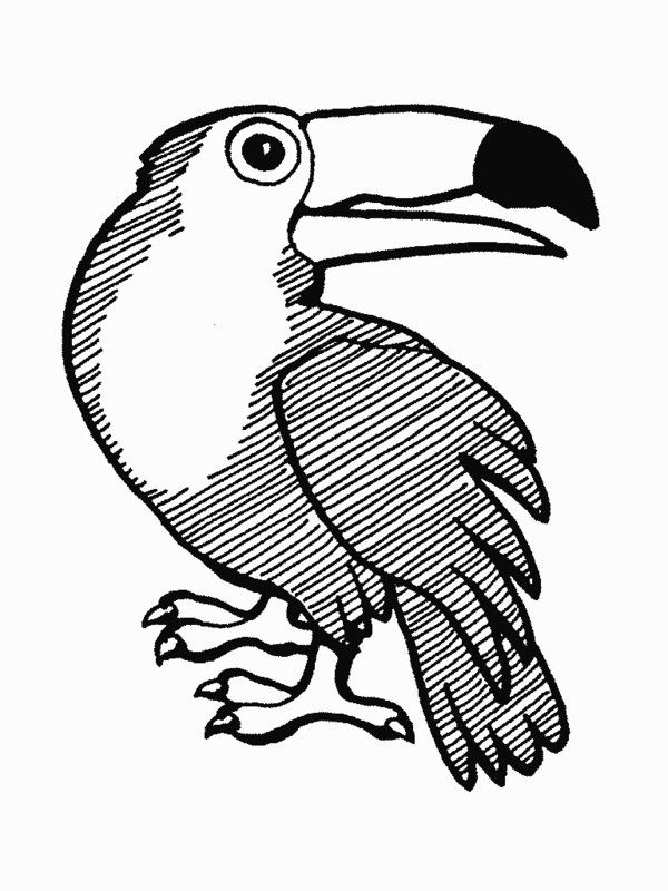 Rainforest Animals Coloring Pages Printable Rainforest Animal