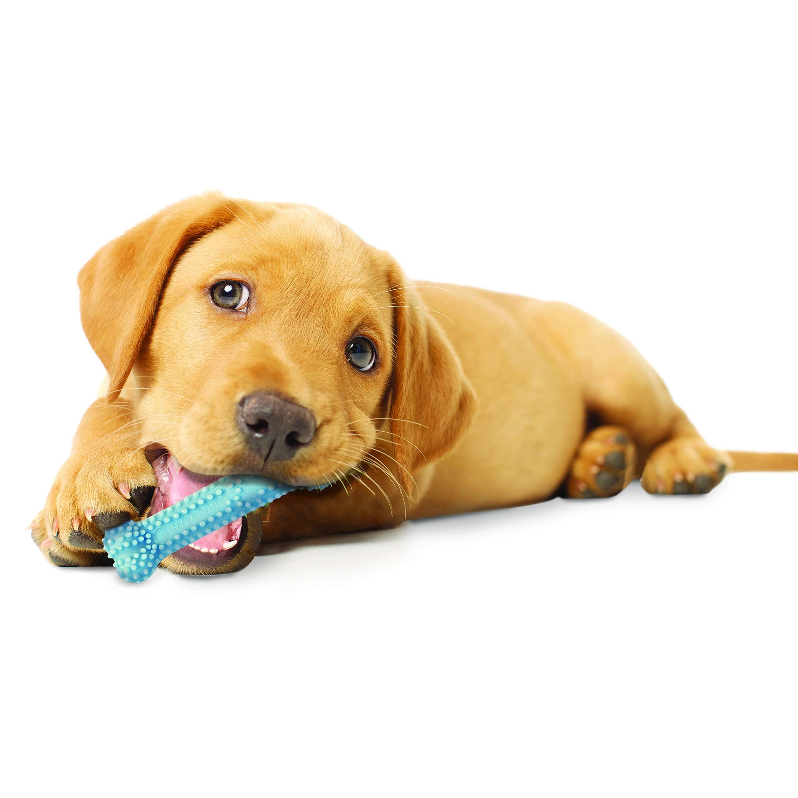 Nylabone Puppy Chew Chicken Dog Chew Toy For Teething Puppies Check This Awesome Product By Going To The Link At In 2020 Puppy Chew Toys Puppy Teething Toy Puppies