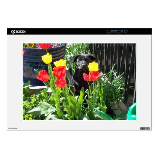 Lacquer Black German Shepherd Puppy Skin For Laptop $29.95