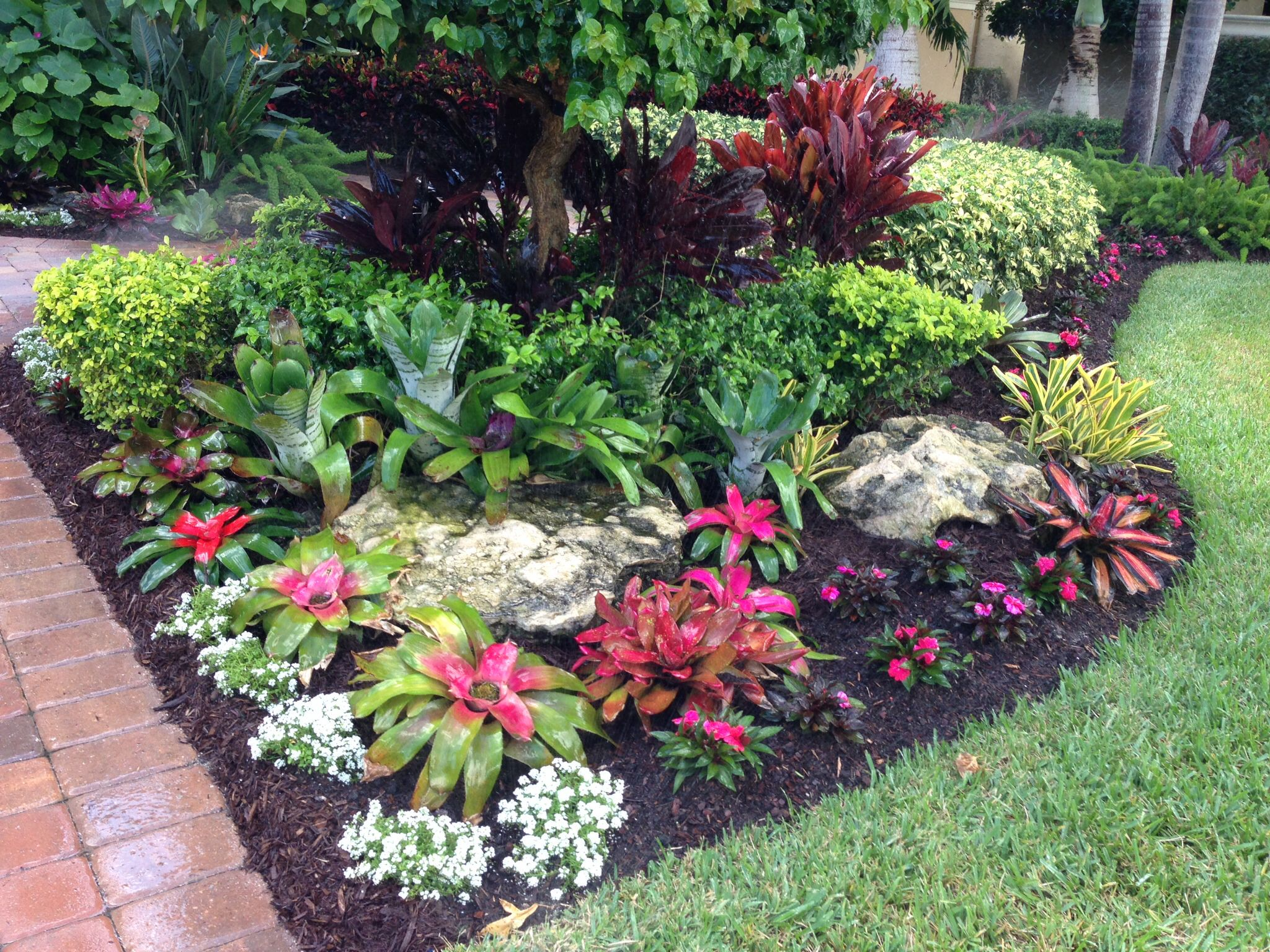 Tropical bromeliad garden design my landscape designs for Front garden plant ideas