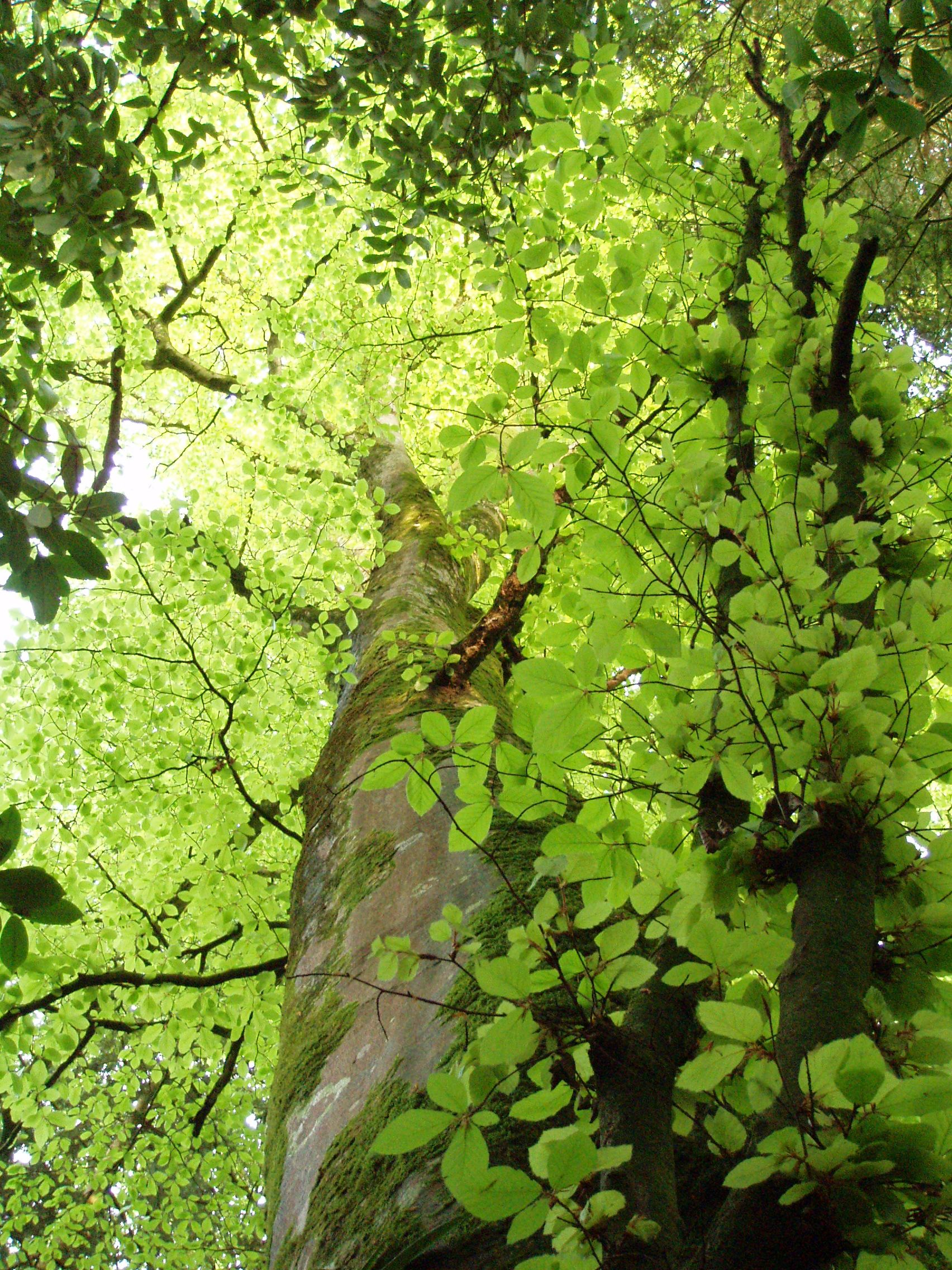 Beech Essence For Self Awareness With Images