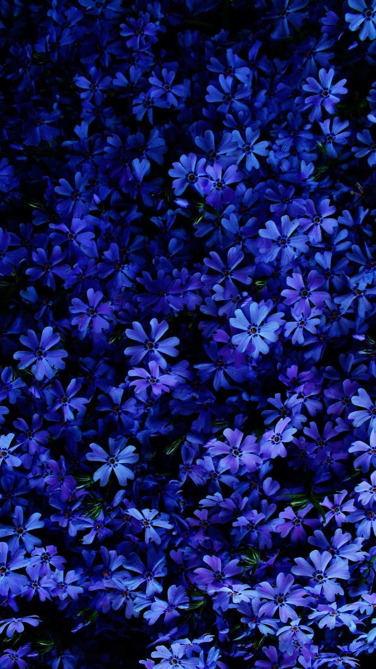 Koket Love Happens Best Flower Wallpaper Blue Flower Wallpaper Flower Phone Wallpaper